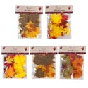 Fall Leaves Maple 5ast 50pc On 12pc Merchstrip/harvest Pbh